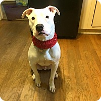 Adopt A Pet :: Ghost - Eastpointe, MI