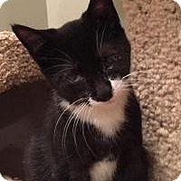 Adopt A Pet :: Seymore - East Hanover, NJ