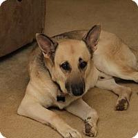 Adopt A Pet :: Max - Morrisville, NC