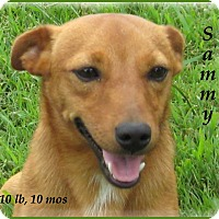 Adopt A Pet :: 2Sammy - Marlborough, MA