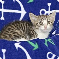 Adopt A Pet :: MARSHA - Gloucester, VA