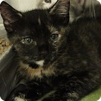 Adopt A Pet :: Marge - Windsor, VA
