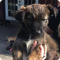 Adopt A Pet :: Hunter - Aurora, CO
