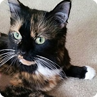 Adopt A Pet :: Hermione - Newport, KY
