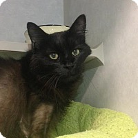 Adopt A Pet :: Chloe - Cashiers, NC