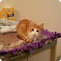Adopt A Pet :: Bridgett - Minneapolis, MN