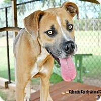 Adopt A Pet :: A077021 - Grovetown, GA