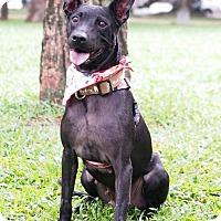 Adopt A Pet :: Anila - San Mateo, CA