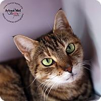 Adopt A Pet :: Comeere - Lyons, NY