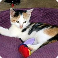 Adopt A Pet :: CINNAMON - West Palm Beach, FL