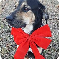 Adopt A Pet :: Rupert - Foster, RI