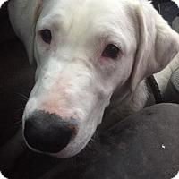 Adopt A Pet :: Opal - Warner Robins, GA