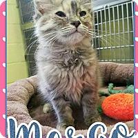 Adopt A Pet :: Margo - Edwards AFB, CA