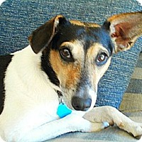 Adopt A Pet :: Rasia Lola - Glen Burnie, MD