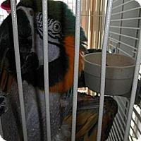 Adopt A Pet :: Sammie - Neenah, WI