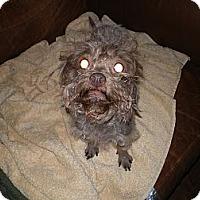 Adopt A Pet :: Leah - Apex, NC