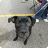 Adopt A Pet :: Jetta! - Hancock, MI