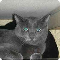 Adopt A Pet :: A-Rod - Lombard, IL