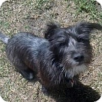 Adopt A Pet :: Pepper (Pippi) - North Port, FL