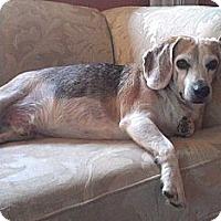 Adopt A Pet :: Ralph - Hamilton, ON