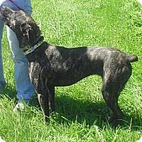 Adopt A Pet :: Charli - Acushnet, MA