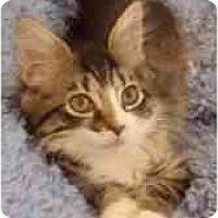 Adopt A Pet :: Tristan & Timothy - Arlington, VA