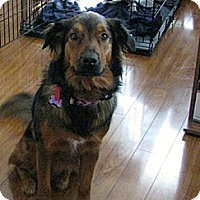 Adopt A Pet :: Zoey- Beautiful girl! - Huntsville, ON