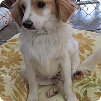 Adopt A Pet :: Tango - Tumwater, WA