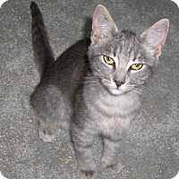 Adopt A Pet :: Jay - Richmond, VA