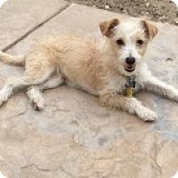 Adopt A Pet :: Sweet Pea's Scamp - Las Vegas, NV