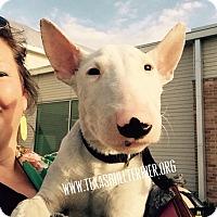 Adopt A Pet :: Archie - Houston, TX