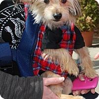 Adopt A Pet :: Lenny - Pierrefonds, QC