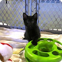Adopt A Pet :: Jerome - Geneseo, IL