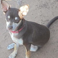 Adopt A Pet :: Jolie - Anton, TX