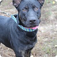 Adopt A Pet :: Boomerang - Waldorf, MD