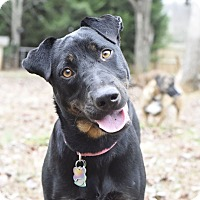 Adopt A Pet :: Delilah - Knoxville, TN