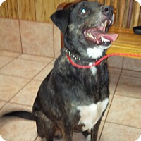 Adopt A Pet :: Zeus - Madisonville, LA