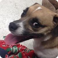 Adopt A Pet :: Leo - Camden, DE