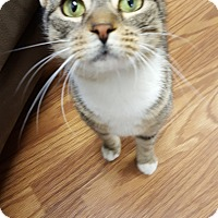 Adopt A Pet :: Katty LaBell - Huntsville, TN