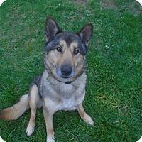 Adopt A Pet :: Ren - Salem, OR