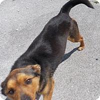 Adopt A Pet :: Bugs Bunny - Lewisburg, TN