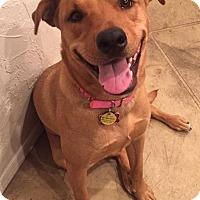 Adopt A Pet :: Leah - Tucson, AZ