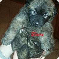 Adopt A Pet :: Blair - Clear Lake, IA