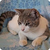 Adopt A Pet :: MAX - Laingsburg, MI