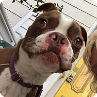 Adopt A Pet :: Kiko - San Francisco, CA