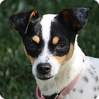 Adopt A Pet :: Marlo - Edmonton, AB
