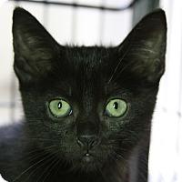 Adopt A Pet :: Epsilon - Sarasota, FL