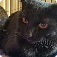 Adopt A Pet :: Princess Myrcella - Berkeley Hts, NJ