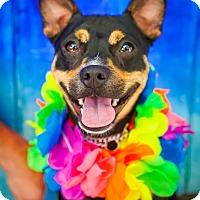 Adopt A Pet :: Carma - Washington, DC