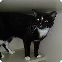 Adopt A Pet :: Grayson - Hamburg, NY